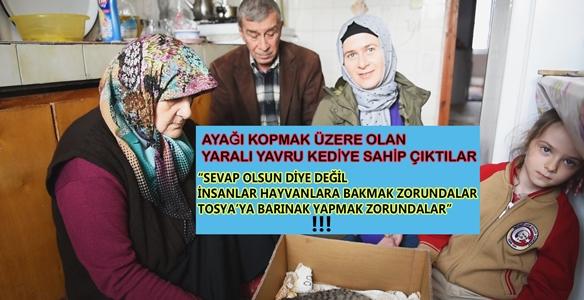 """TOSYA'DA AYAĞI KOPMAK ÜZERE OLAN YAVRU KEDİYE KEMER AİLESİ SAHİP ÇIKTI """" BARINAK YAPMAK ZORUNDALAR"""".."""