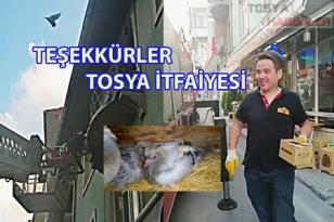 YAVRU KUŞLARIN İMDADINA TOSYA İTFAİYESİ YETİŞTİ..